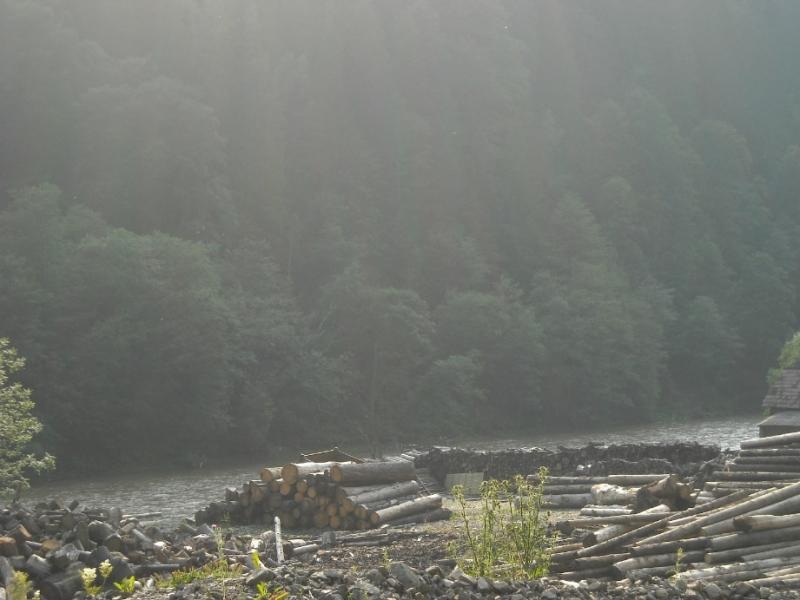 Măsuri pentru combaterea tăierilor ilegale de păduri