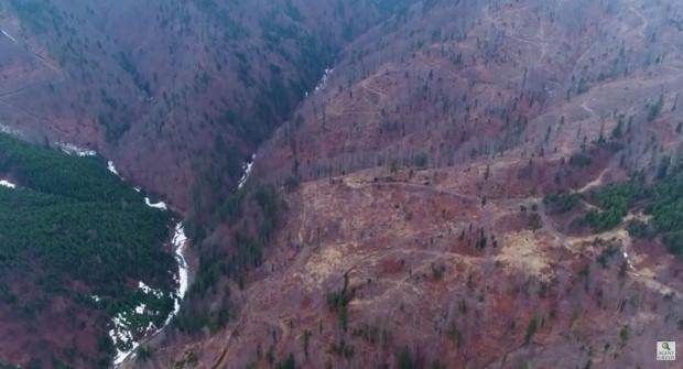 Dezastru în pădurile din zona Vidraru