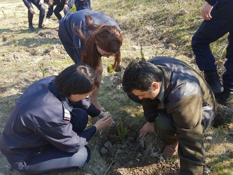 Pompierii ne salvează - deputaţii ne amanetează ... pădurile