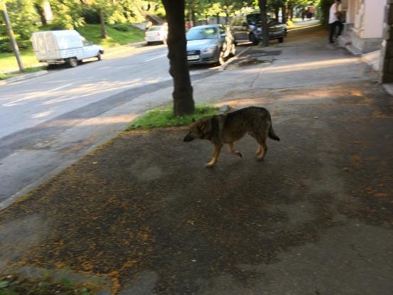 Câinii, din nou pe străzi