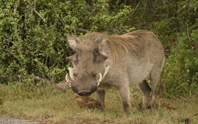 Cum pot obţine argeşenii despăgubiri pentru pagubele produse de animalele sălbatice