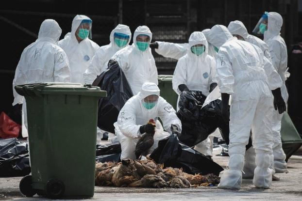 Măsuri de protecţie împotriva gripei aviare în Argeş