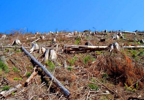 Acţiune de regenerare a pădurilor din Argeş