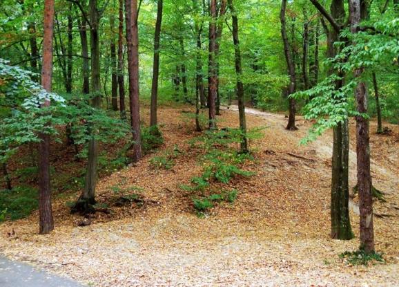 Propunere de instituire a regimului de arie naturală protejată de interes național și declararea ca rezervație naturală pentru zona naturală Pădurea Trivale