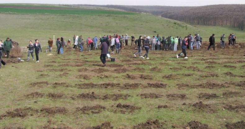 Program masiv de împădurire în Argeş
