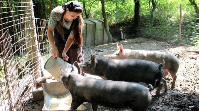 Simona Bucura Oprescu: PNL vrea să le interzică românilor să crească porci în godpodării