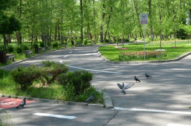 Parcurile din Pitești, redeschise!