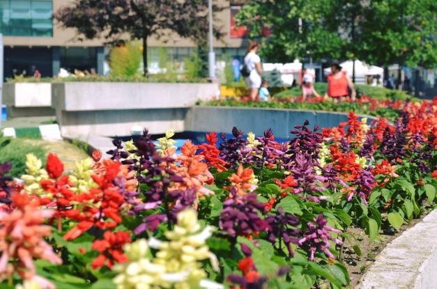 Peste 100.000 de răsaduri de flori, plantate în Pitești