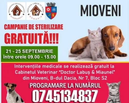 Campanie de sterilizare gratuită a câinilor și pisicilor, în Mioveni