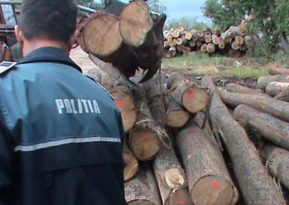 Peste 75 de metri cubi de material lemnos au fost confiscaţi, împreună cu un autocamion, o autoutilitară şi un atelaj