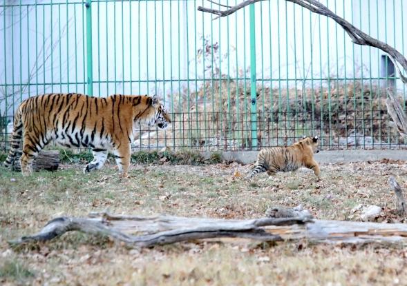 Zoo Pitești, deschisă de Rusalii