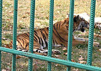 Gratis la Grădina Zoologică