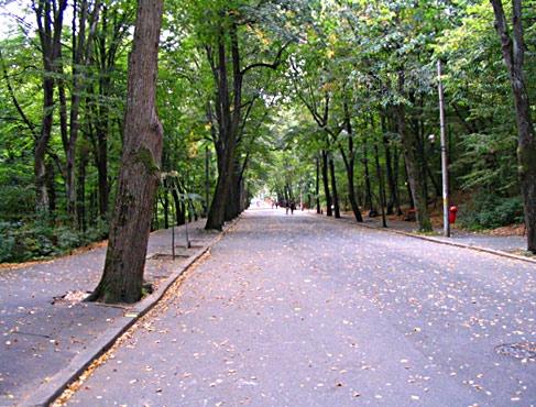 Proceduri pentru ca pădurea Trivale să devină arie protejată