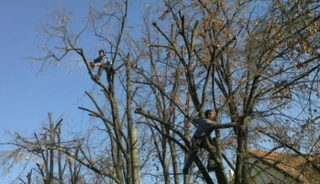Copacii din Piteşti au început să se usuce