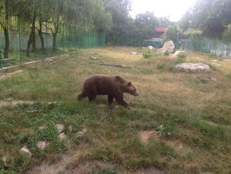 Grădina Zoologică – de la Gâsca Nilului la Ursul Brun