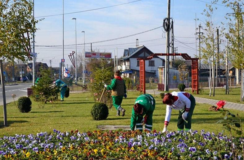 Activități de întreținere a spațiilor verzi la Mioveni