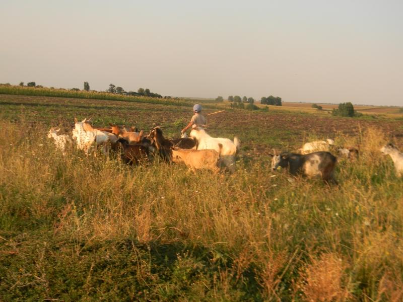 Atenţie! Rentierii agricoli riscă să piardă banii!
