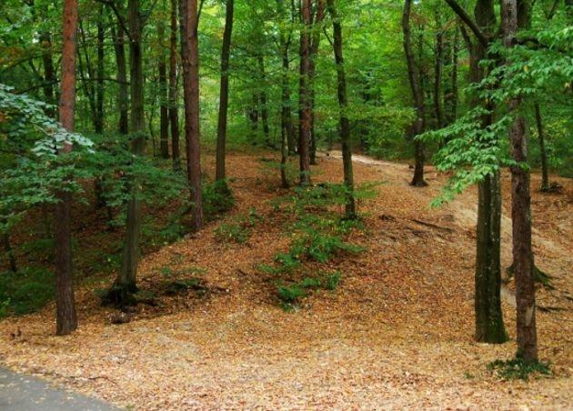 Pădurea Trivale, arie protejată pe sute de hectare