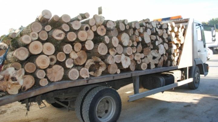Se fură lemne... ca-n codru
