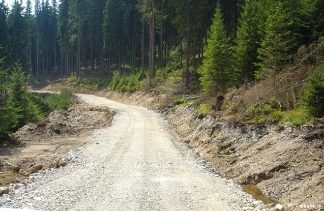 Bani pentru patru drumuri forestiere din Argeş