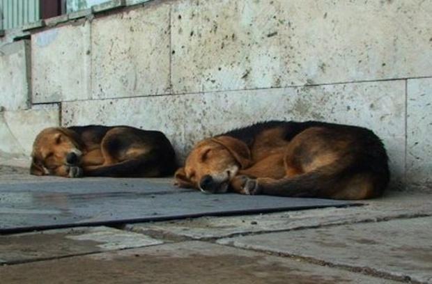 246 de câini capturaţi în două luni!