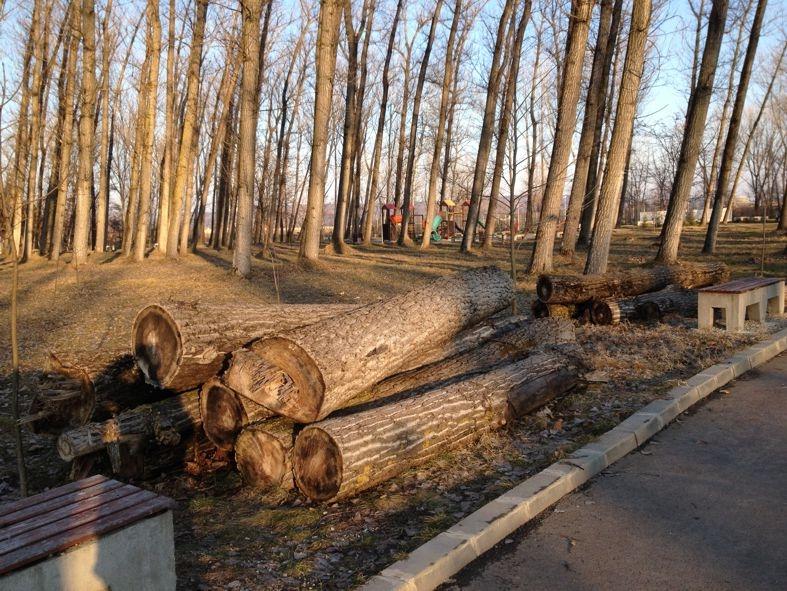 Liber la tăierea arborilor din Pitești
