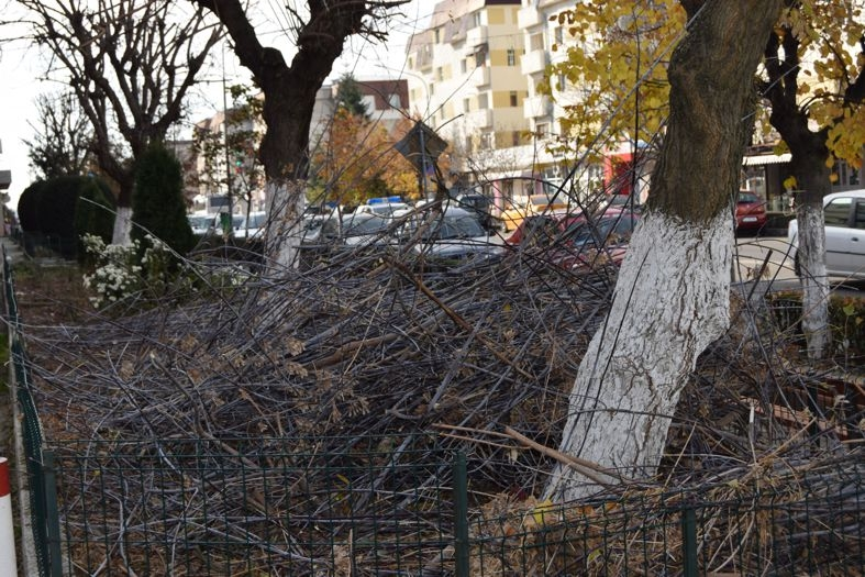 A început campania de toaletare a copacilor din Mioveni