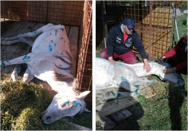 Cal maltratat, abandonat şi lăsat să moară într-un zăvoi din Mioveni