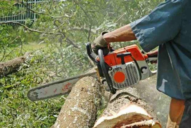 Dosar penal pentru tăieiere ilegală de arbori