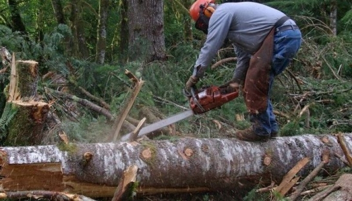 O nouă aplicaţie împotriva tăierilor ilegale de arbori