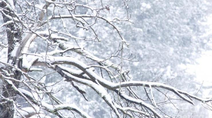 Cod galben de ninsori în Argeş