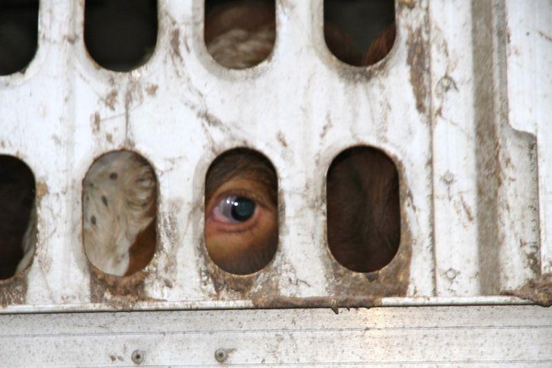 În fiecare zi, în întreaga lume, sunt ucise 144 milioane de animale terestre şi mai mult de 200 milioane de animale marine