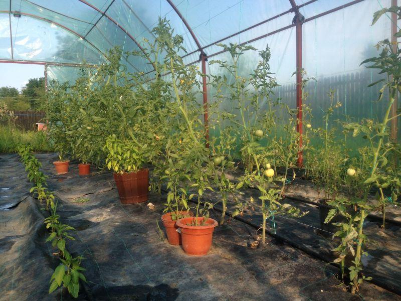 5,5 milioane lei alocate pentru sprijinirea temporară a producătorilor de legume și fructe