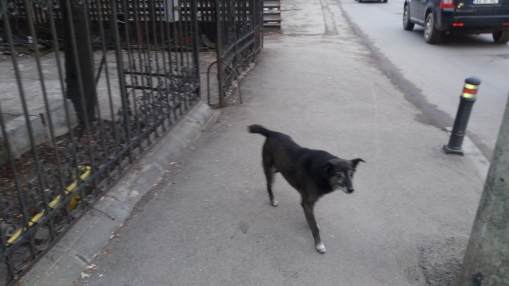 Câini cu stăpân, pericol public
