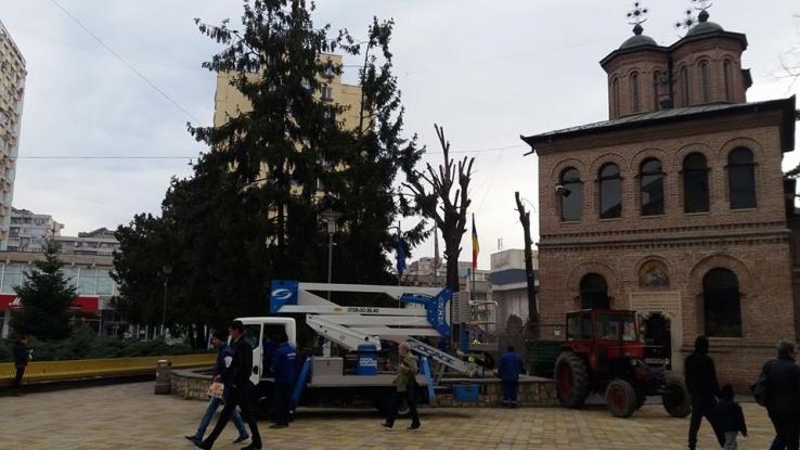 Ordin de la Calinic: Tăiaţi copacii!