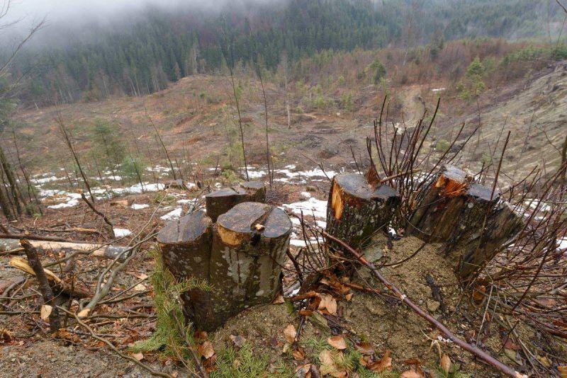 Dovezile distrugerii pădurilor de la Vidraru