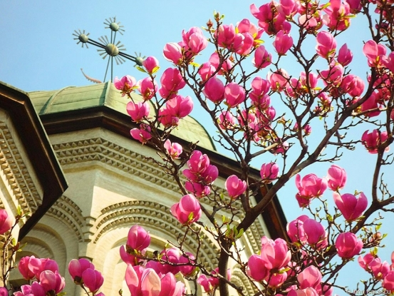 Încă un festival al florilor în Argeş!