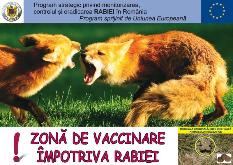 Mioveni: Campanie de vaccinare antirabică a vulpilor