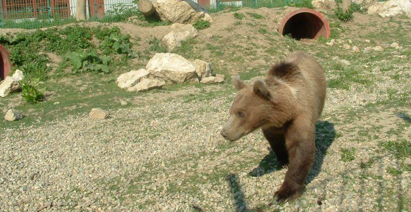 Program normal de Paști la Grădina Zoologică