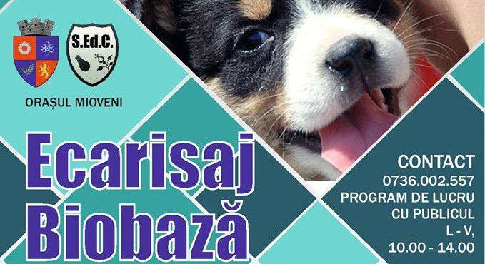 Adopții canine la Mioveni