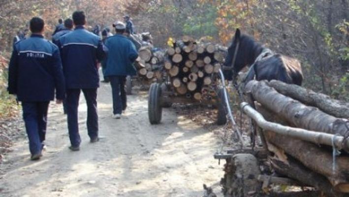 Mafia lemnului, sub spectrul puşcăriei