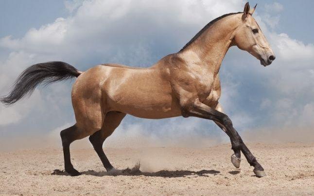 Anemie infecţioasă la cai în Argeş