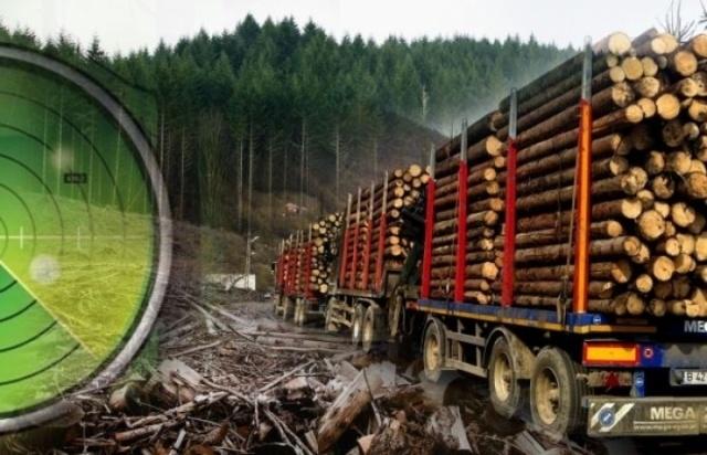 Garda Forestieră: Sesizări penale în Argeş