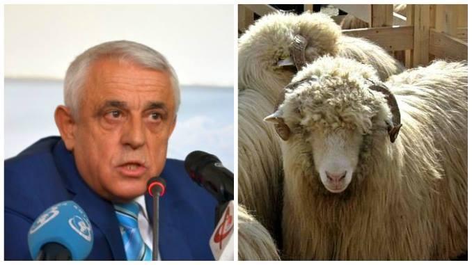 Crescătorii de ovine din Argeş pot primi subvenţii pentru lână