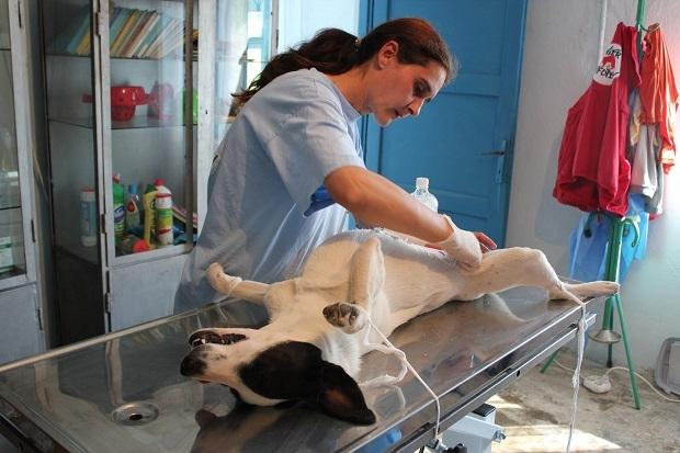 Campania de sterilizare gratuită continuă la Topoloveni