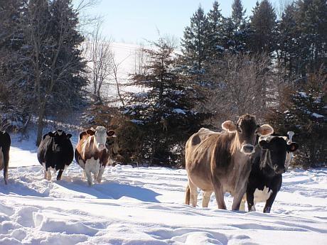 DSVSA cere măsuri speciale de protecţie a animalelor în Argeş