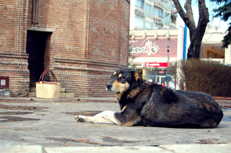 116 câini fără stăpân capturați în luna februarie