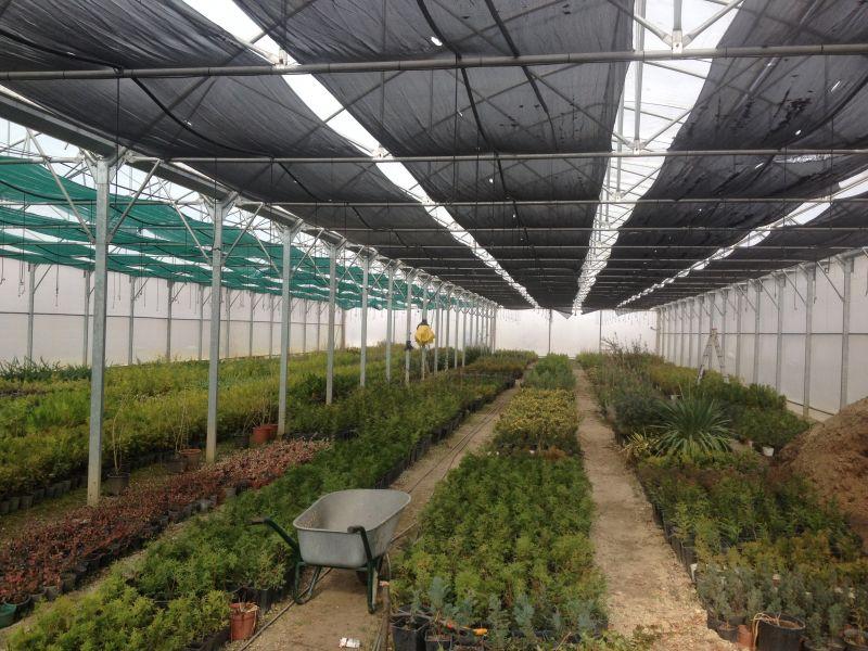 SC Salpitflor Green SA a început plantările de primăvară