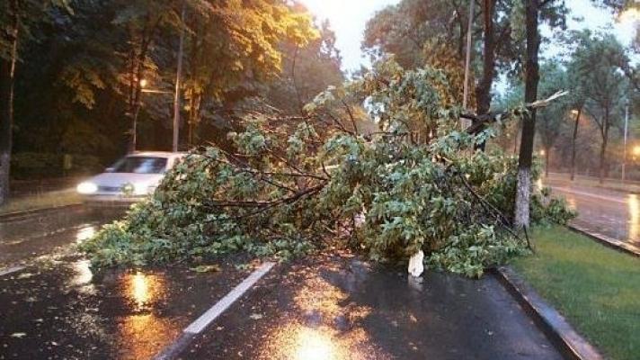 Copacii-pericol din Piteşti, în atenţia autorităţilor