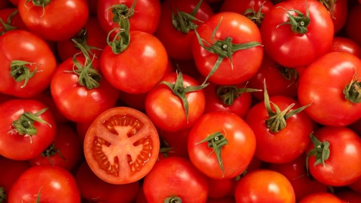 Anunţ important de la Direcţia Agricolă pentru legumicultori